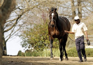 Redoute's Promise Half-Brother Impresses In Gr3