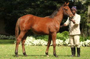 Oratorio - Streetwise by Street Cry. Half-brother by Var sold for R3 million at CTS March Select Yearling Sale. Damline of Redoute's Choice.