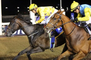 Honest Prince wins two days later at Greyville.