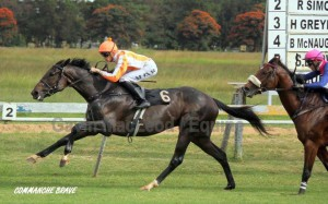 Comanche Brave Wins Zim Champions Cup Listed