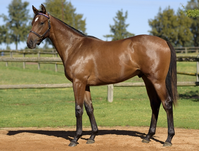 Pagoda by Mogok as a yearling, bred by Varsfontein Stud. Image: Varsfontein Stud