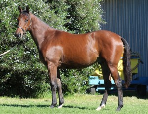 Lot 306 Prince Of Byword Byword - Beautiful Princess by Toreador Dam own sister to Gr2/Gr3 winner Lazer Star