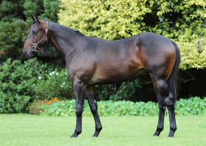 Lot 342 Clouds Crusade - Coastal Beauty by Mogok Damline of Ballito Boy