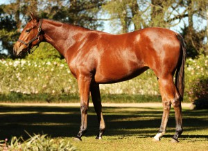 Lot 239 Varquera Oratorio - Varlet by Var Second foal. Dam a 5-time winner, twice Gr3 placed.  Dam a half-sister to 5-time winner and SP Private Collection. Family of Windjammer.