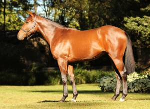 Lot 456 Unnamed Bold Silvano - Implicit Trust by Tiger Ridge Dam a winner, half-sister to SW Atlantic Storm (SNL). Family of British sires Little Wolf, Camouflage, Disguise, Smuggler, Elusive Pimpernel.