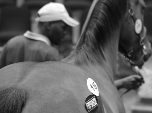Qualifying KZN-Breds At The National Yearling Sale