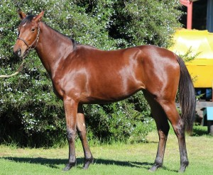 Lot 31 Magic's First Master Of My Fate - Magic Smoke by Fort Wood  First foal out of a Gr2 winning mare
