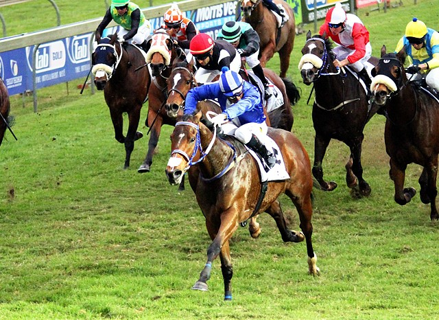 Bull Valley gave his sire, Bush Hill Stud based Toreador, his second Gr1 win when taking home the Gr1 Tsogo Sun Sprint from a strong field. Image: Candiese Marnewick