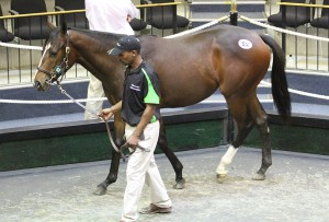 Mitra Magic, the top priced KZN-bred filly by Oratorio sold for R350 000.