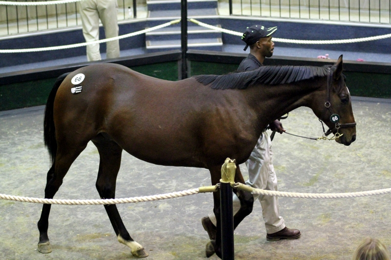 Rathmor's KZN-bred son of Dynasty, a full brother to Gr1 winner, Lady In Black. He sold for R1,7million. Image: Candiese Marnewick