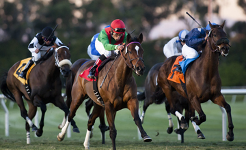 Gypsy's Warning (SAF) with Joel Rosario up wins the Matriarch Stakes GI at Hollywood Park, Inglewood Calif. November 26, 2010 Xander Evers/ Equisport Photos