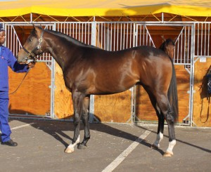 Lot 55, SOLICITOR GENERAL, a colt by BRAVE TIN SOLDIER out of a stakes winner or 7 races