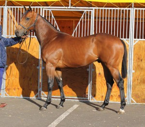Lot 51, TICKET HOLDER, a colt by CURVED BALL out of a multiple stakes winning family that includes Princess Victoria.