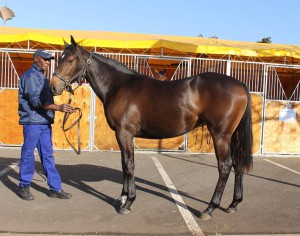 Lot 162, FRIEND ZONE, a Toredor filly out of the family of Jet Master