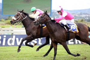 Cuvara (white bridle green cap) wins at Scottsville over 1200m. He has won and placed from all three starts, a very exciting prospect.