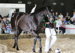 Rathmor Dominate Day 1 Of KZN Yearling Sale