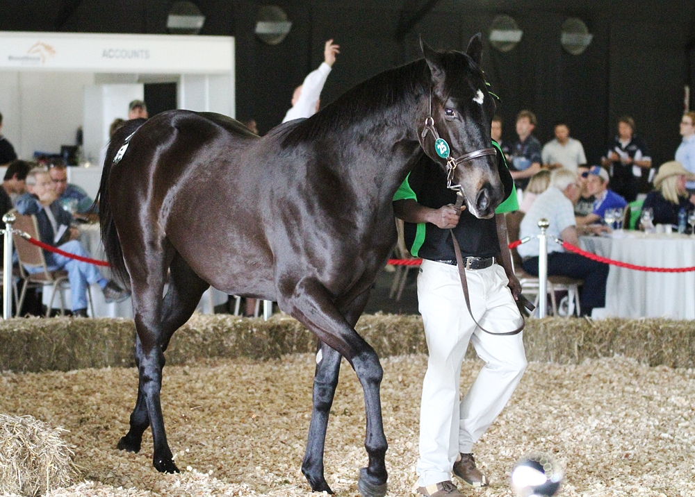 The top selling lot of the first day of the KZN Yearling Sale came from Rathmor Stud, with a Duke Of Marmalade filly for R460 000. Image: Candiese Marnewick