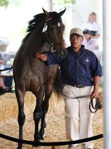 Queen Forever pictured in the sales ring at Val De Vie. She was voted Eastern Cape Champion Juvenile Filly this year. Image: Candiese Marnewick