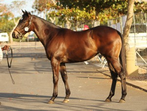Backworth Stud: KZN Yearling Sale - Var Filly On Sale
