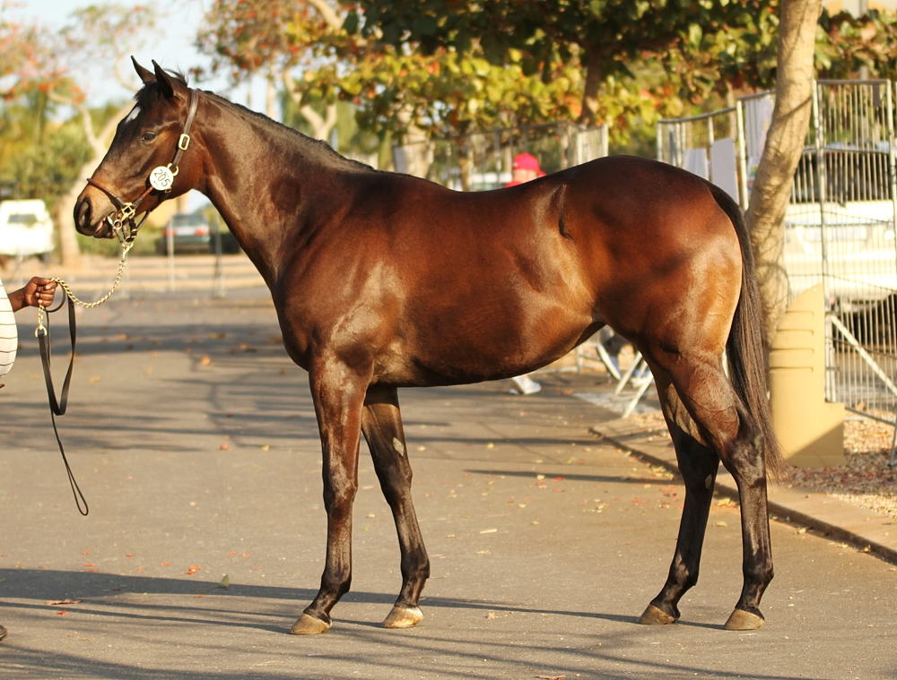 Lot 205 Extravargant at the KZN Yearling Sale, a full sister to winner Cuvara. Image: Candiese Marnewick