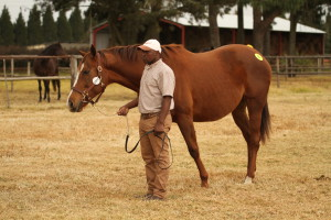 Backworth Top BSA KZN Mare Sale