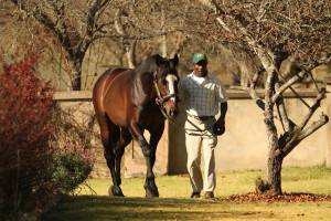 Watch The Capetown Noirs - Black Type From First Runner!