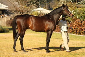 Second Win For Smart Capetown Noir Filly Brandina