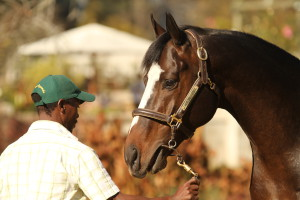 KZN Presented At 2018 Cape Premier Yearling Sale