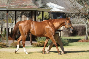 Willow Magic a month ago at Summerhill Stud. Image: Candiese Marnewick