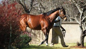 Summerhill Stud: International Press Stallion Parade