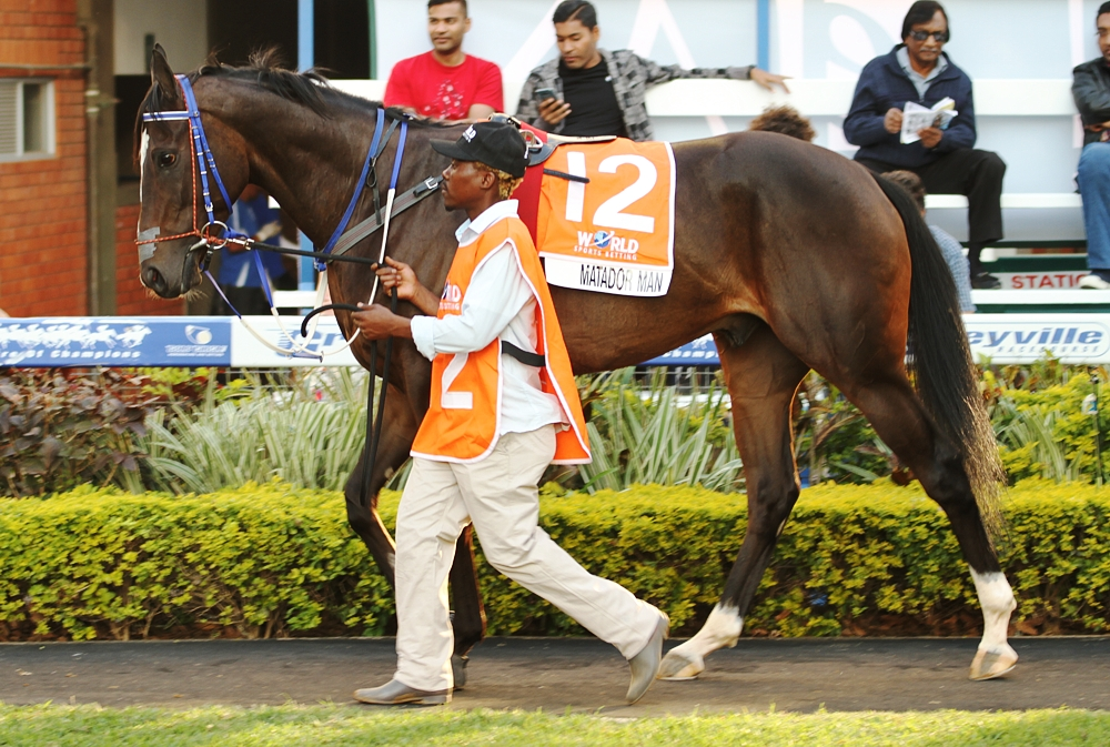 Matador Man looking a picture in the Gr1 Champions Cup parade ring. Image: Candiese Marnewick