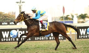 Gr2 Winner For Broodmare Sire Kahal; Matador Man 3rd In Champions Cup