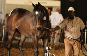Noble Tune Leading Sire Of KZN Yearling Sale; Backworth Filly Tops KZN Second Day