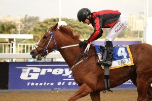KZN-Bred Wukkin' Up Secures Off To Stud Listed