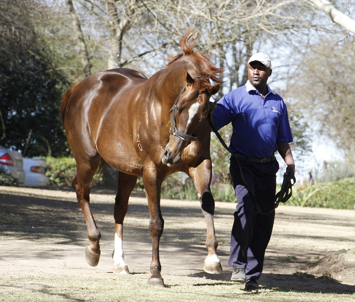 King's Chapel at the Bush Hill Stud Stallion Day. Image: Candiese Marnewick