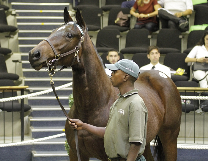 Spring Valley Stud at the National Yearling Sale. Image: Candiese Marnewick