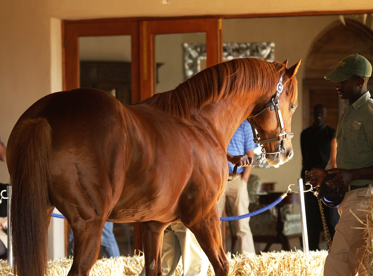 Linngari at Summerhill Stud. Image: Candiese Marnewick