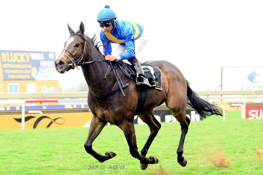 Esploratore wins on debut impressively at Turffontein for sire Eightfold Path. Image: JC Photos