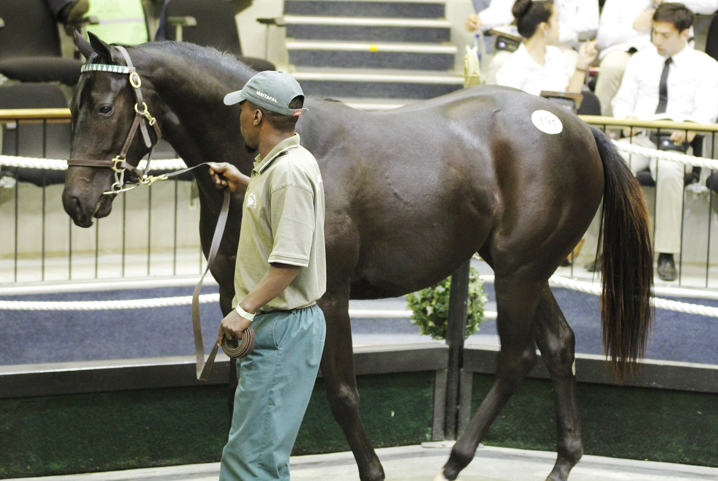Swell Time pictured in the National Yearling Sales ring where she sold for R125 000. Image: Candiese Marnewick