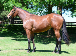 Tammany Hall sold for R80 000 at the CTS Ready To Run Sale. Image: Summerhill Stud