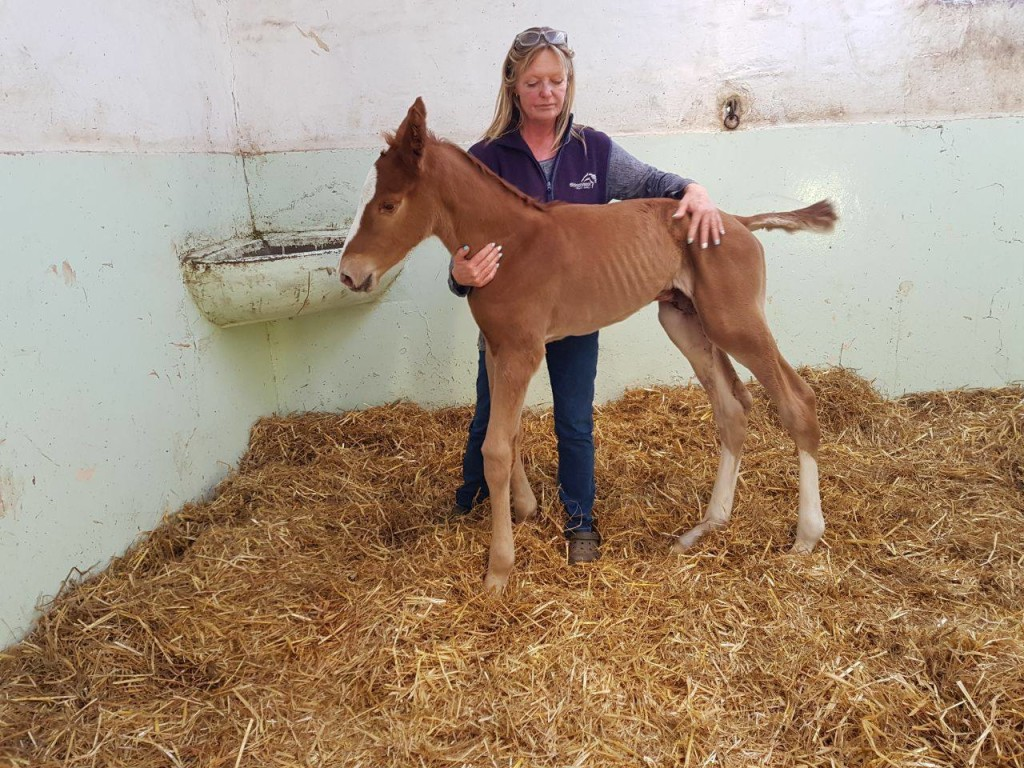 Karin Render with the lovely big newborn Flying The Flag colt.