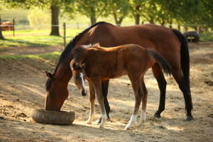 Foal by Bezrin
