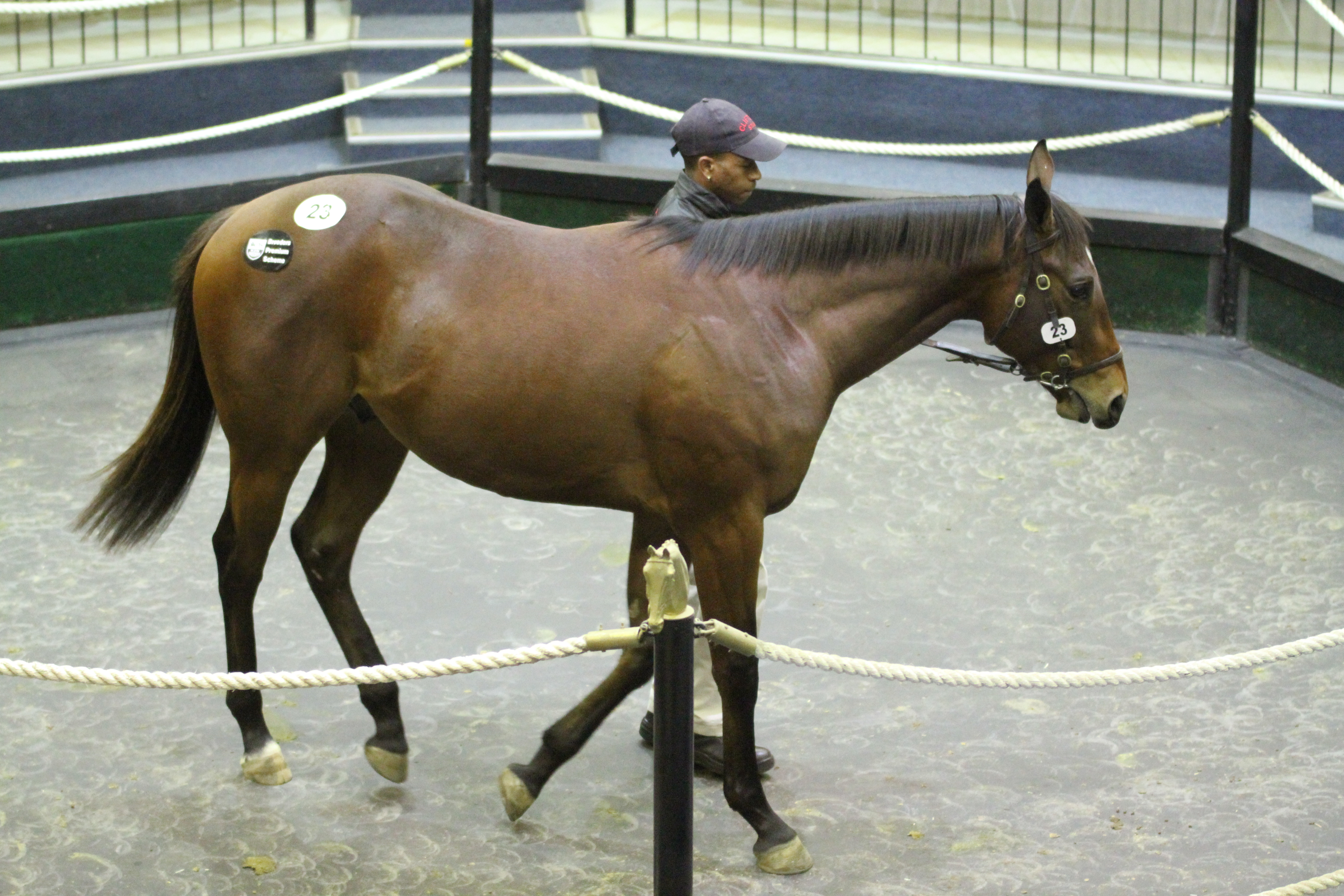 Born A Bully, a half-brother to Gr3 winner The Plunderer won on debut in the Maiden Juvenile Plate this afternoon for breeders Clifton Stud. He sold for just R20 000 at the National 2YO Sale. Image: Candiese Marnewick