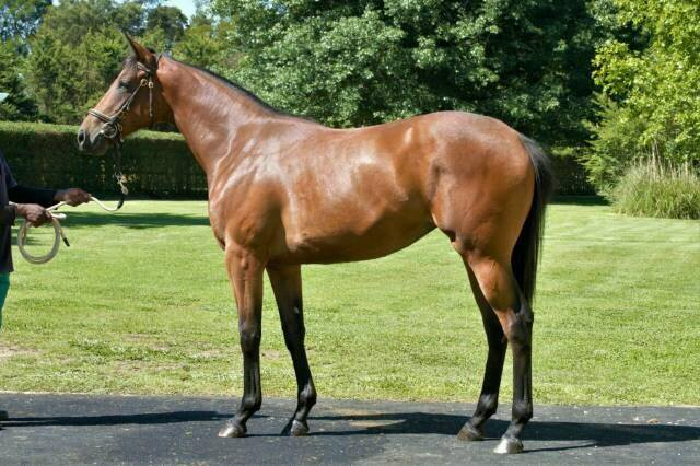 Lot 6 Unnamed. By SILVANO out of a half-sister by FASTNET ROCK to sire and Gr2 winner BANKABLE. Catalogue page: http://capethoroughbredsales.com/lots/2018-cpys-6