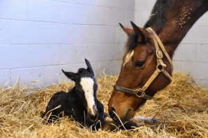 Flying The Flag News: Gr1 Winner Photo Call Produces First Foal