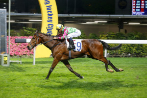 Export For SA Horses To Hong Kong Looking Positive