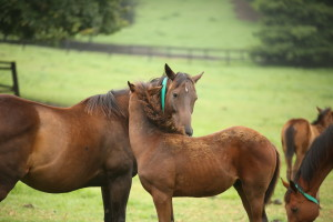Allmosthaditall with her Dynasty colt. Image: Candiese Marnewick