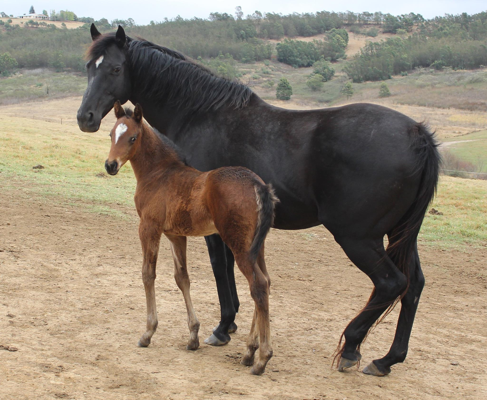 Colchium with her Potala Palace foal. Image: Cathy Martin
