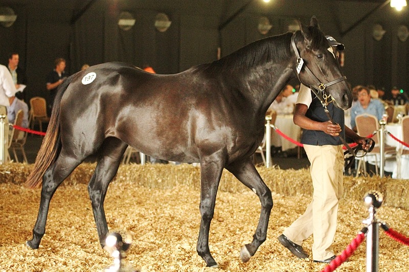 Val-La-Ree in the KZN Yearling sales ring at Sibaya, where she was knocked down for R150 000. Image: Candiese Marnewick