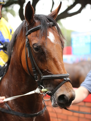Je Suis Silver wins at Greyville yesterda, the 4th for the Curved Ball filly. Image: Candiese Marnewick